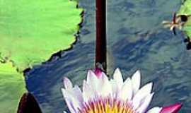 Eldorado do Sul - Flôres do Lago