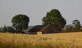 Engenho Velho - Engenho Velho-RS-Propriedade rural-Foto:Amanda Trombetta