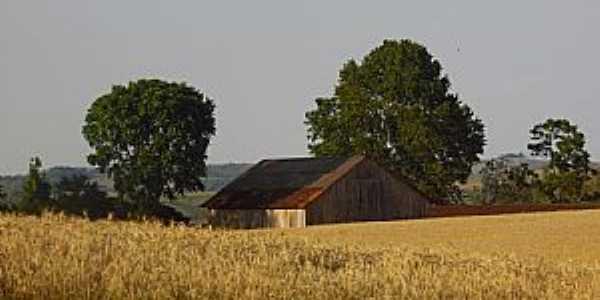 Engenho Velho-RS-Propriedade rural-Foto:Amanda Trombetta