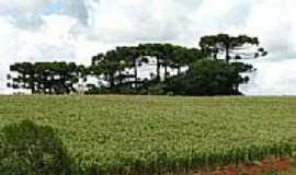 Erebango - Cultivo de milho foto por CMRech