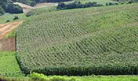 Erebango - Plantação de milho-Foto:CMRech