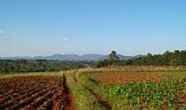 Fazenda Vilanova - Lavoura-Foto:Cláudia F. Bildhauer