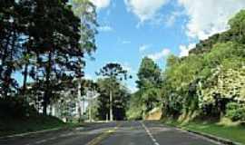 Gramado - Rodovia saindo da cidade de Gramado-RS-Foto:TKL50