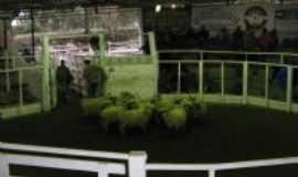 Herval - Pista de Remate Sindicato Rural, Por Ney Robero Dutra de Quadro