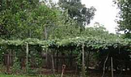 Ijucapirama - Parreiral-Foto:rafaelmacall