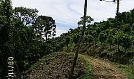 Ilópolis - Imagem Rural-Darlan Corral