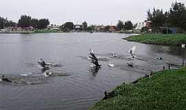 "Imb� - Imb�-RS-Aves no lago""Bra�o Morto""-Foto:Susy Dienstbach"