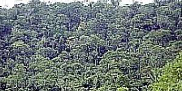 Laje do Banco-BA-Floresta de Cabruca-Foto:E.C. Landau