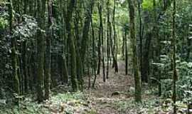 Ivorá - Trilha no Monte Grappa-Foto:MDZancan