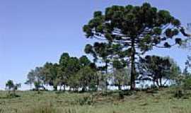 Jaquirana - Sítio-Foto:Leori tartari