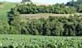 Lajeado do Bugre - Plantação de Milho-Foto: CLICKSIL