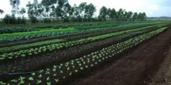 Olericultura Maçambará, Por Leonidas Piovesan