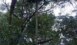 Marques de Souza - Palmeira nativa  por Rubem A M Frosi