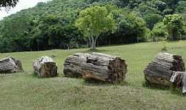 Mata - Mata-RS-Segmentos do tronco de uma árvore petrificada-Foto:Mauricio Ballarotti