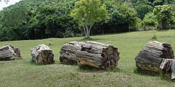 Mata-RS-Segmentos do tronco de uma árvore petrificada-Foto:Mauricio Ballarotti