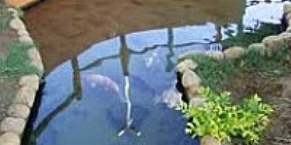 Peixes na Pra�a de Lap�o-BA-Foto:Ateloucos