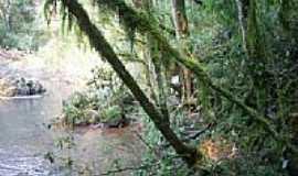 Montauri - Rio Lajeado-por Elizabeth Nardi