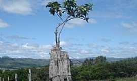 Morrinhos - Árvore no mourão da cerca-Foto:Marcelo de A. Silvei…