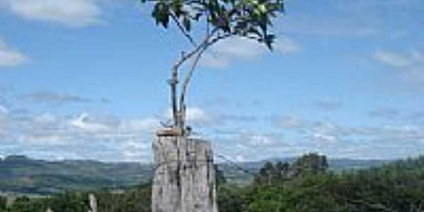 Árvore no mourão da cerca-Foto:Marcelo de A. Silvei…