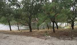 Mostardas - Mostardas-RS-Siprestes na beira do lago-Foto:Angelo Carlos Ronchi