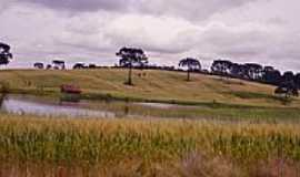 Muliterno - Plantação de trigo-Foto:ftumelero