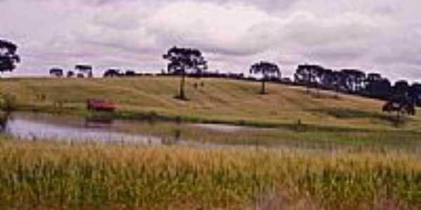 Plantação de trigo-Foto:ftumelero