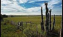 Passo Novo - Cacto e Campo em Passo Novo-Foto:lucaspzz