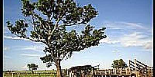 Propriedade rural em Passo Novo-Foto:lucaspzz
