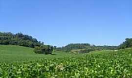 Paulo Bento - Plantação de soja-Foto:jmanriquez