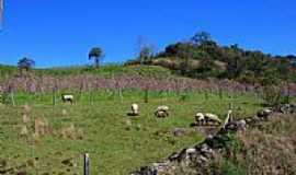 Pinto Bandeira - Paisagem Rural foto por ANELISE KUNRATH