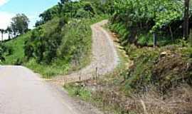 Pinto Bandeira - Pinto Bandeira-RS-Parreirais na beira da estrada-Foto:Rene Hass