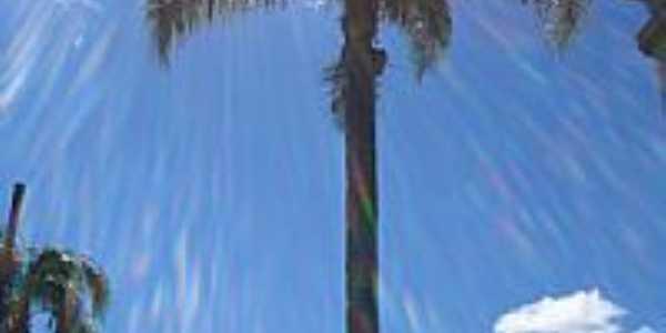 Pinto Bandeira-RS-Lindo coqueiro na praça central-Foto:ANELISE KUNRATH