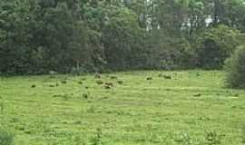 Pólo Petroquímico de Triunfo - Parque Ecológico - Capivaras