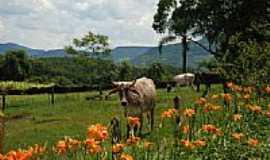 Presidente Lucena - Paisagem rural-Foto:ANELISE KUNRATH