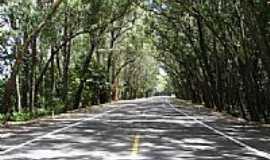 Rancho Velho - RS40- Otazu