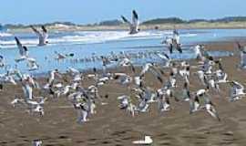 Rio Grande - Gaivotas na Praia do Cassino em Rio Grande-RS-Foto:Nelson Biasoli dos A…