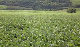Rio Toldo - Rio Toldo-RS-Cultivo de soja-Foto:Alcedir F. Sostizzo