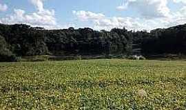 Rio Toldo - Rio Toldo-RS-Vista do lago e a floresta-Foto:www.jornalboavista.com.br