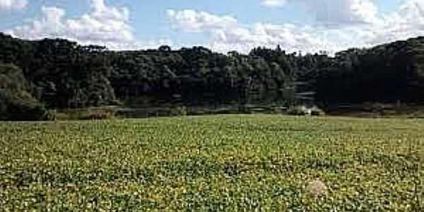 Rio Toldo-RS-Vista do lago e a floresta-Foto:www.jornalboavista.com.br