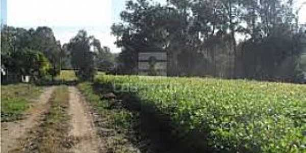 Santa Flora-RS-Área rural-Foto:www.vivareal.com.br