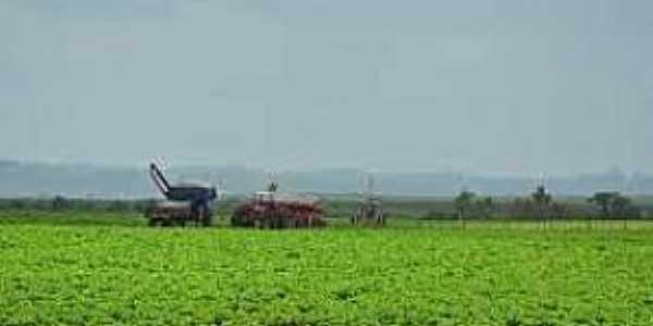 Santa Flora-RS-Plantação de soja-Foto:diariodesantamaria.clicrbs.com.br