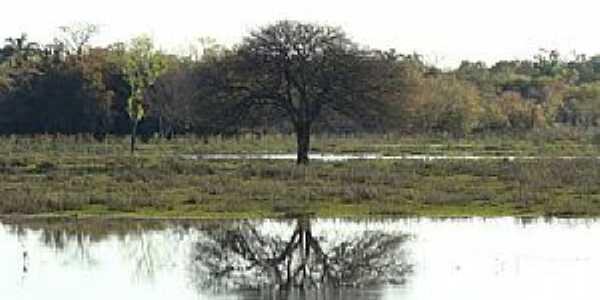Santa Flora-RS-Reflexo da árvore no lago-Foto:www.mundi.com.br