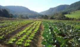 São Domingos do Sul - Produção de hortaliças , Por Lauro Antonio Finatto