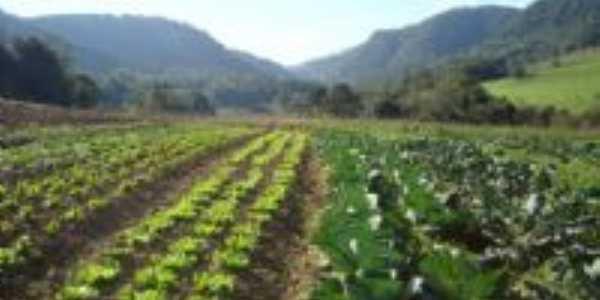 Produção de hortaliças , Por Lauro Antonio Finatto