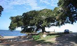 São Lourenço do Sul - São Lourenço do Sul-RS-Velha Figueira à beira do Arroio Caraha e Lagoa dos Patos-Foto:Henrique de BORBA