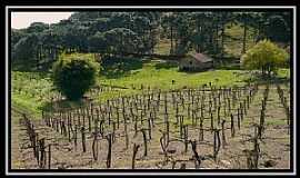 São Marcos - São Marcos-RS-Área rural-Foto:Fabiano M.