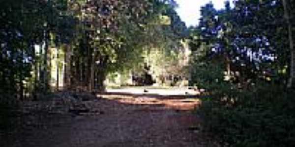 Estrada Arborizada-eltonstrada