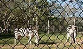 Sapucaia do Sul - Zebra no Parque Zoológico-Foto:Henrique de BORBA