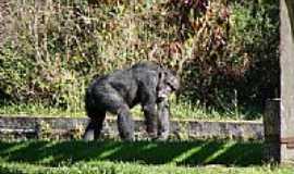 Sapucaia do Sul - Recinto dos Primatas-Parque Zoológico-Foto:Henrique de BORBA