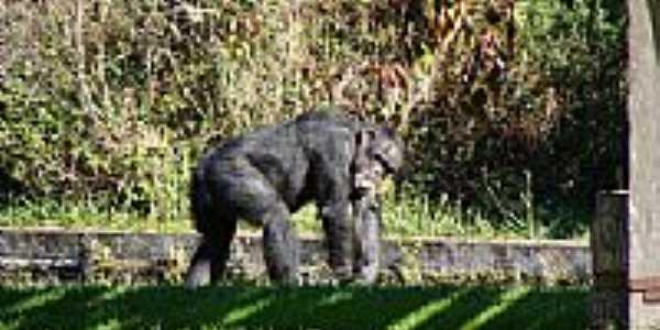 Recinto dos Primatas-Parque Zoológico-Foto:Henrique de BORBA